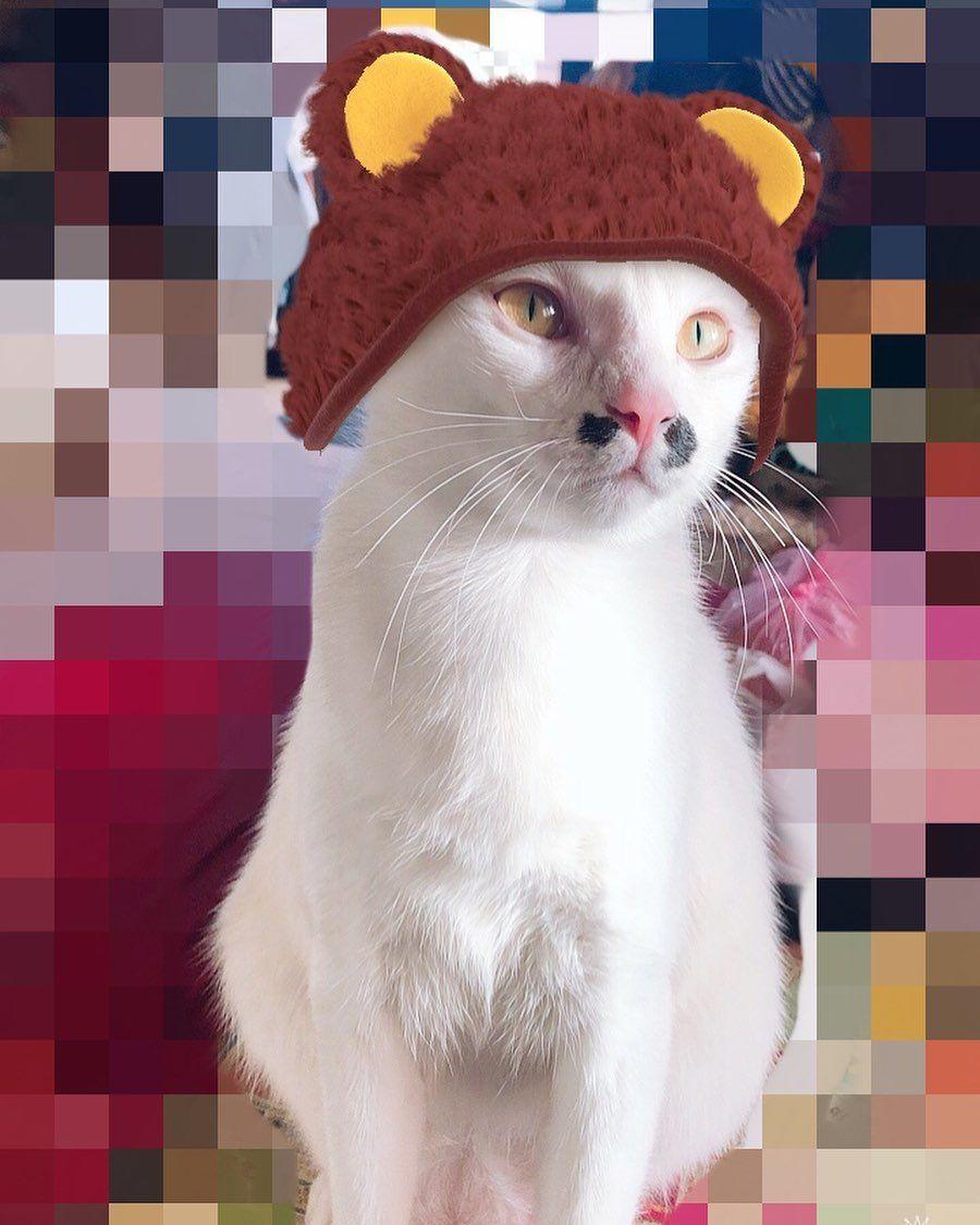 Top 10 Cats In The World Beautiful Cat Breeds Beautiful Cat Dinosaur Stuffed Animal