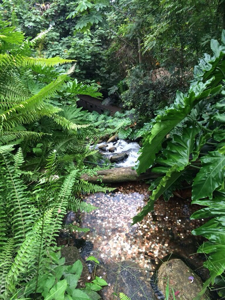 Experience an incredible tropical rainforest in the UK #sciencetourist