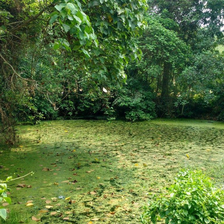 Image result for forest kavu