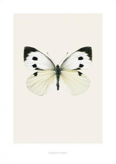 hagedornhagen - Pieris brassicae (S9) 70x100