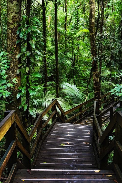 Wooden trail in Daintree Rainforest, one of the oldest
