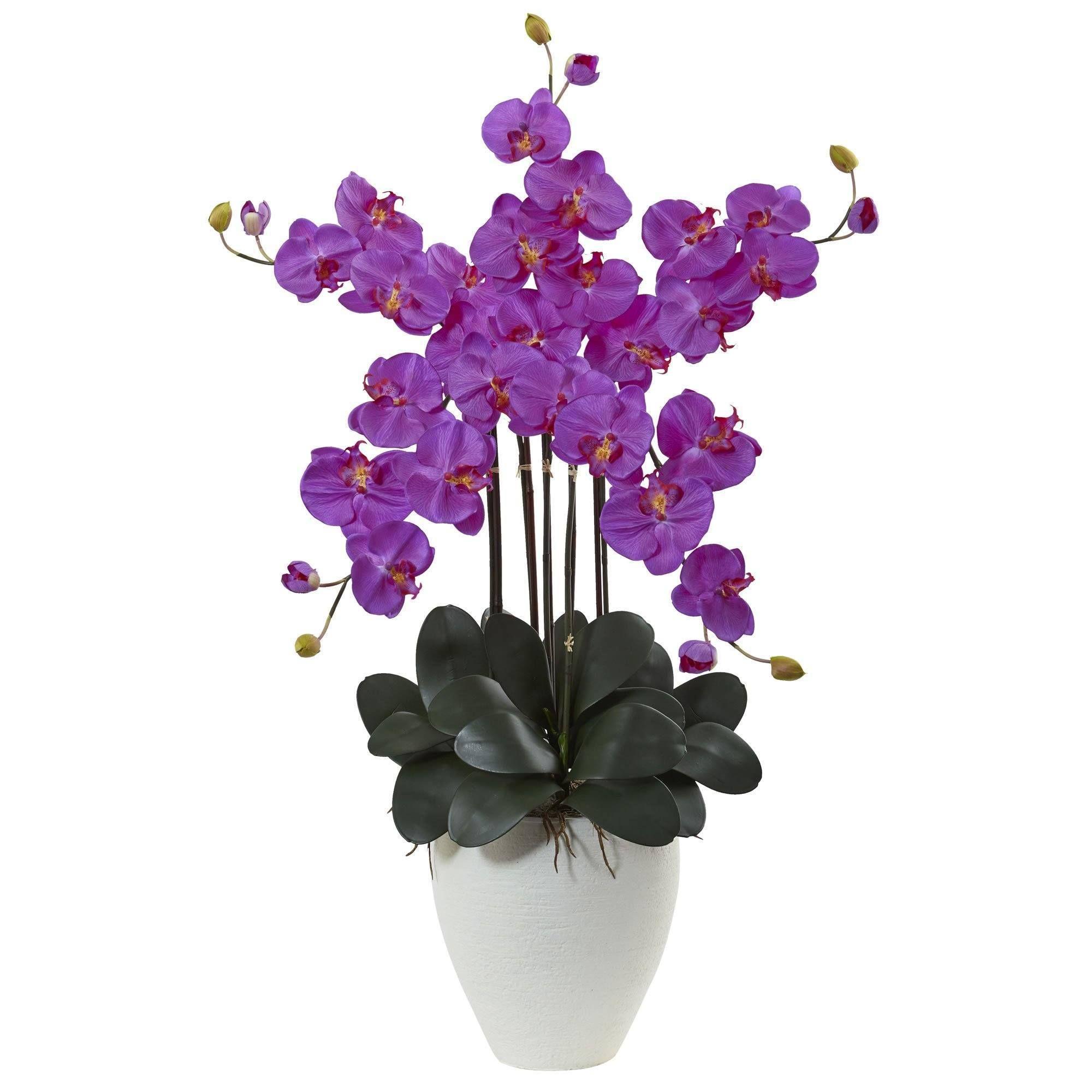 "Photo of 50"" Giant Phalaenopsis Orchid Arrangement"