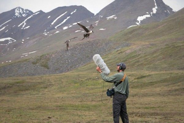 World's Largest Natural Sound Library Is Now Online