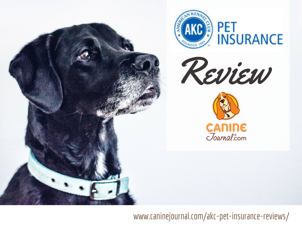 Pin On Pet Insurance Health