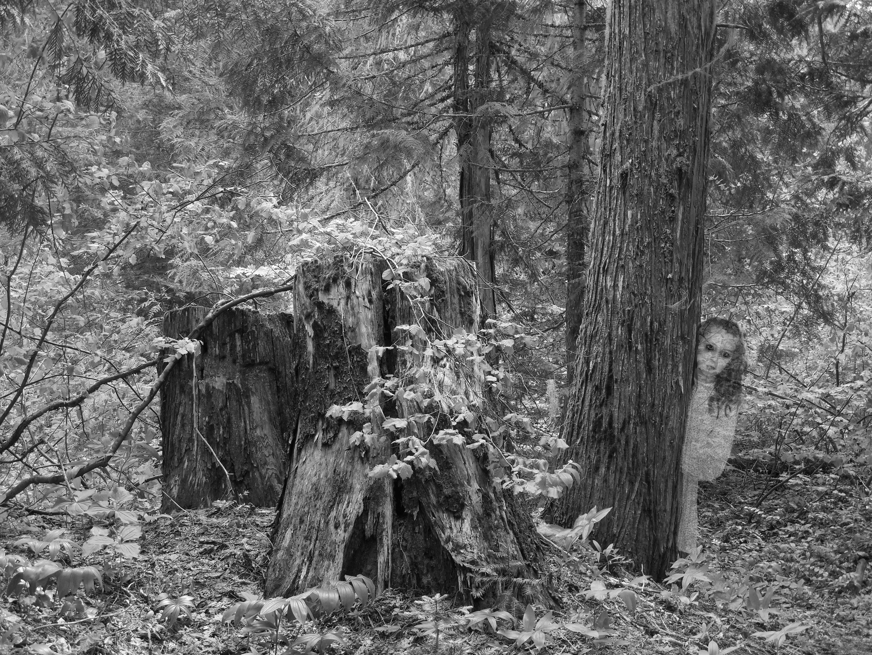 Pin on Buckeye Belle/Tillie of the trees