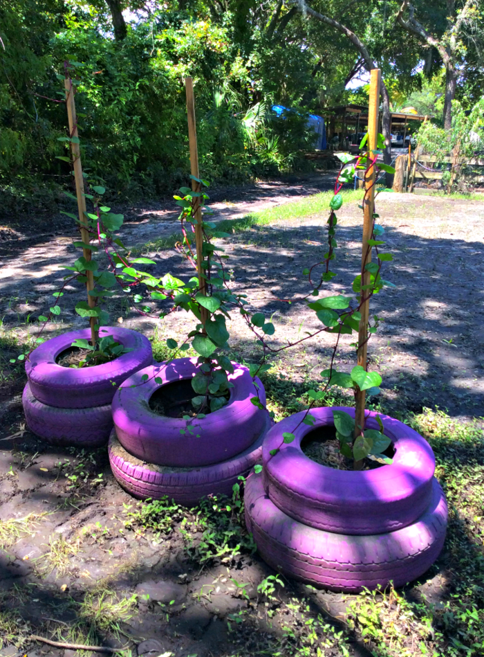 Garden Ideas Plants Of Old Car Tires Paint Purple