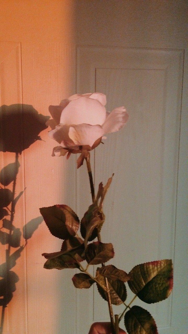 Iphone Rose Gold Aesthetic Tumblr Iphone Rose Gold Schmetterling Tapete Aesthetic Roses Flower Aesthetic Flower Wallpaper
