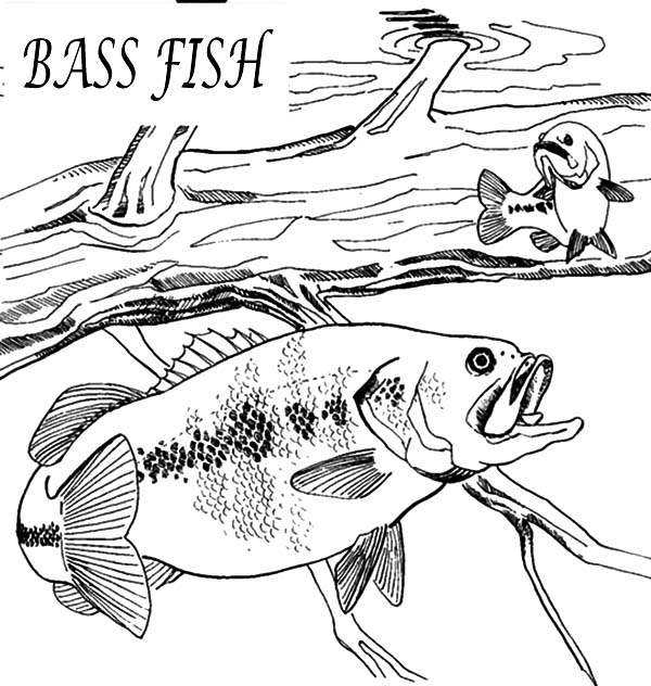 Hungry Bass Fish Coloring Pages : Best Place To Color Fish Coloring Page, Coloring  Pages, Drawing Projects