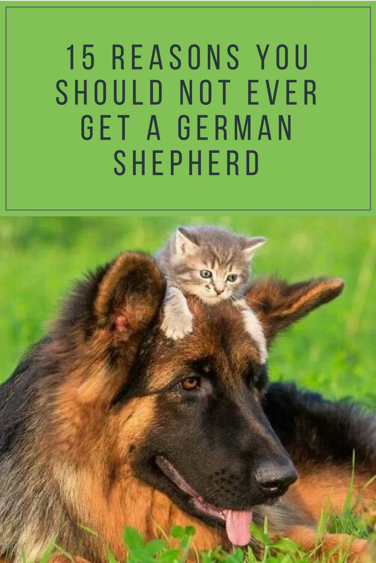 15 Reasons Why You Should NOT Adopt German Shepherds