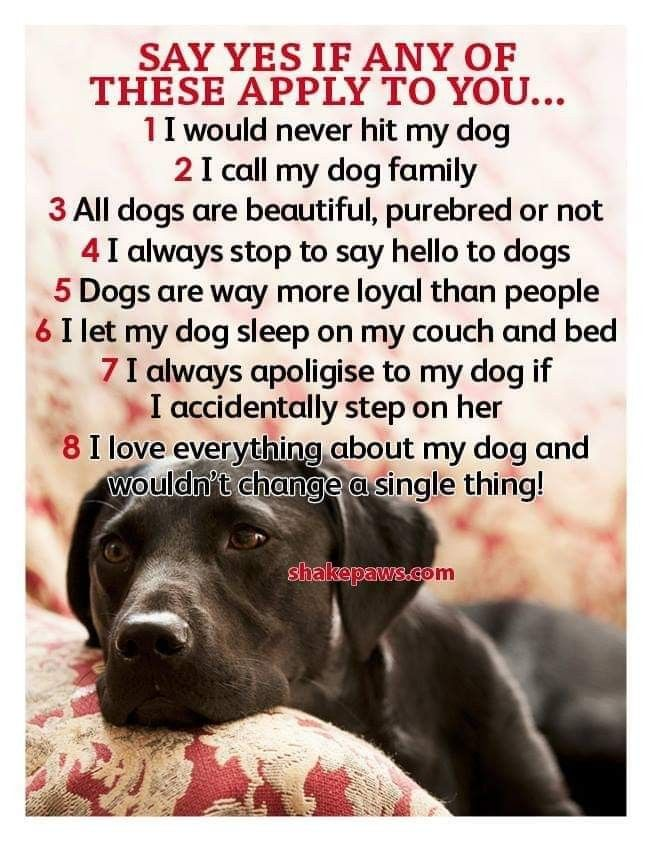 Pin By Werner Krix On Pet With Images Baby Love Quotes
