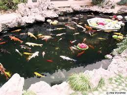 """Résultat de recherche d'images pour """"bassin de jardin"""""""