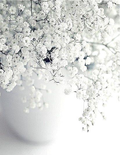 White Flowers Nature White Aesthetic White Flowers Flowers