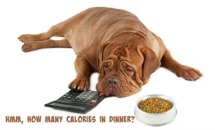 Calculating a dogs daily calorie needs pet insurance