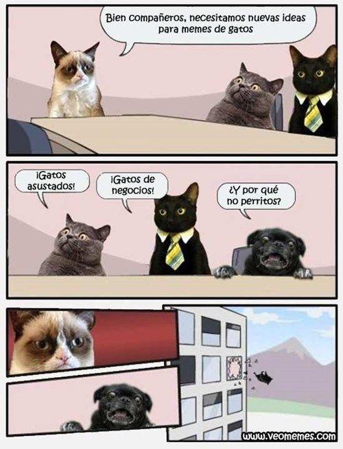 Nuevas Ideas Para Memes De Gatos Meme Gato Gatos Cool Perros Tontos