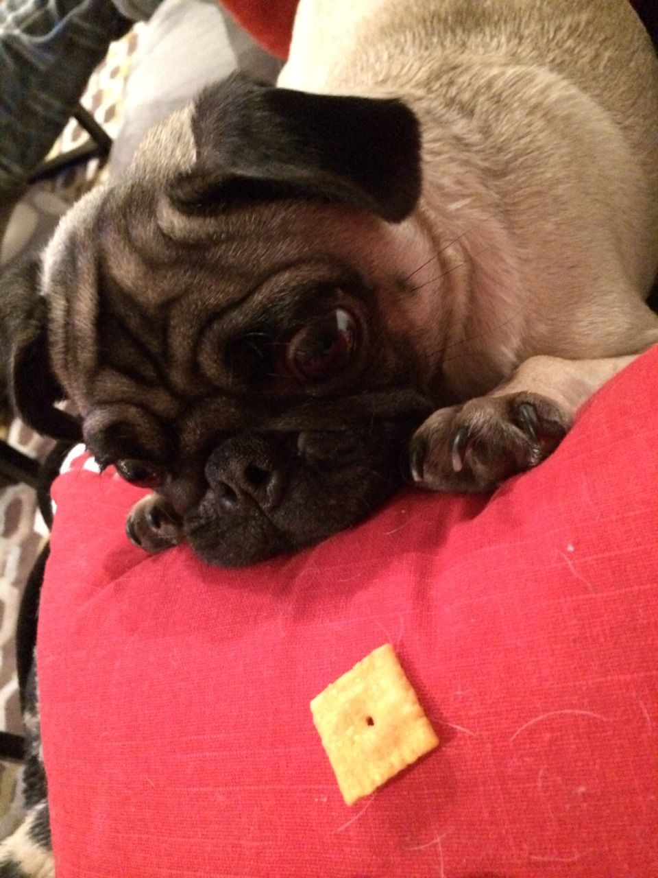 Is That A Cheez It Or Are My Eyes Playing Tricks On Me Cute