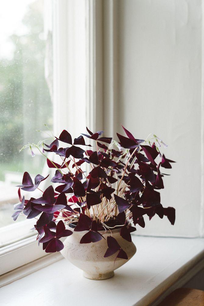 A plant like my grandmother had.