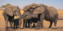 Poach ivory is the new blood money for terrorism, including Boko Haram, who kidnapped Nigerian school girls. Pinterest took $100M from Rakuten, the biggest online retailer of ivory products on the Internet. How do you think that ivory was obtained? From poachers! Pinterest, shame!   https://www.thedodo.com/community/elephantsdc/what-do-elephants-have-to-do-w-540628816.html