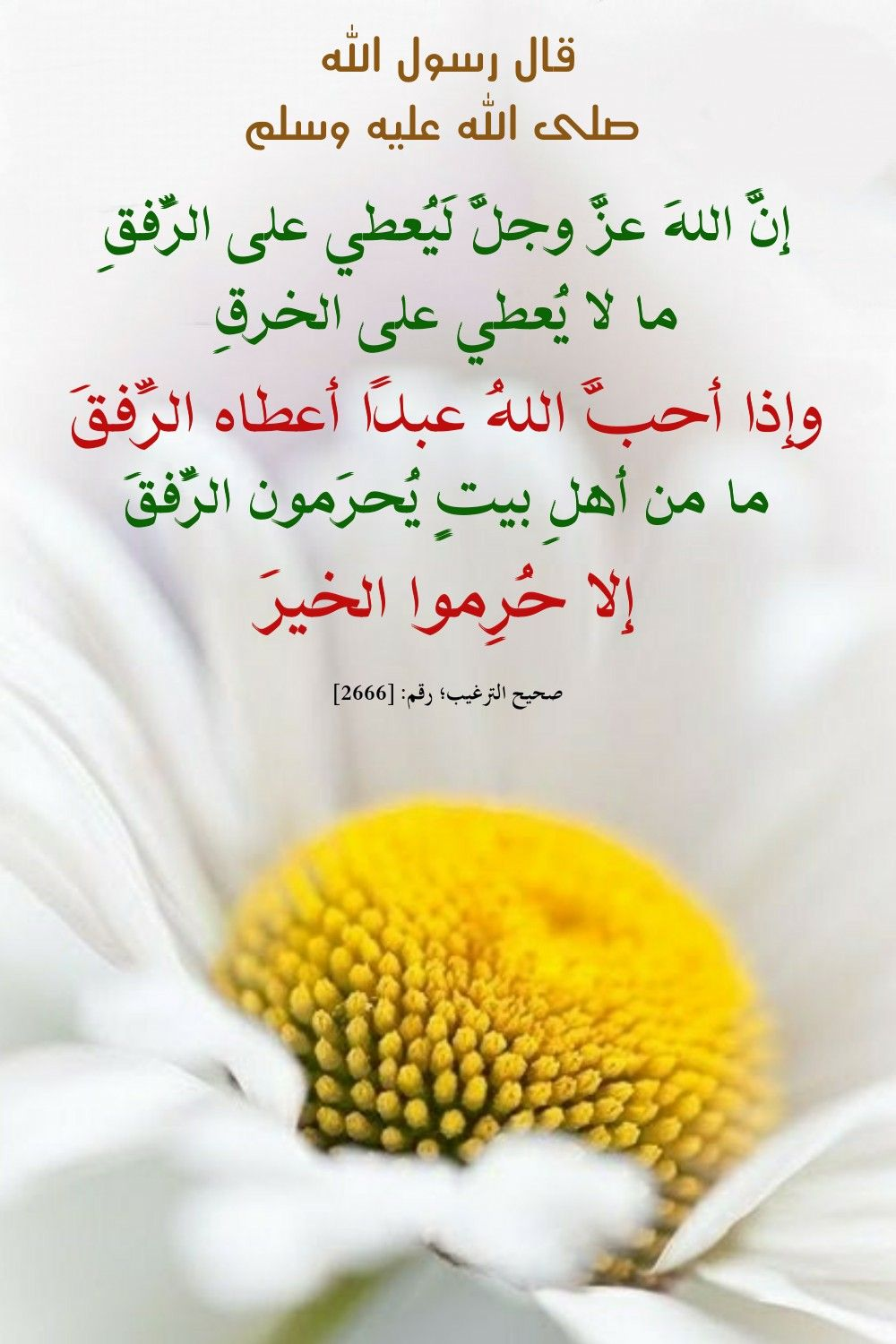 Pin By Sura On احاديث Islamic Information Words Quotes Islamic Quotes