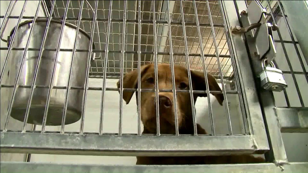An Overcrowded Kc Pet Project Packed With Record Number Of Stray