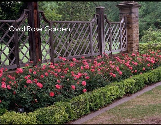 Rose Garden Design here is another small area in a home in atherton that succeeds as a rose garden because the area was so small we included small shrub roses and Roses Oval Rose Garden
