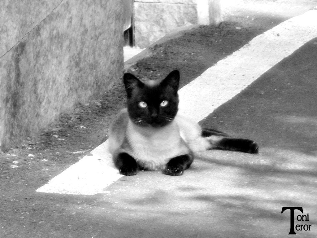 Siames en la calle by Toni Teror on 500px