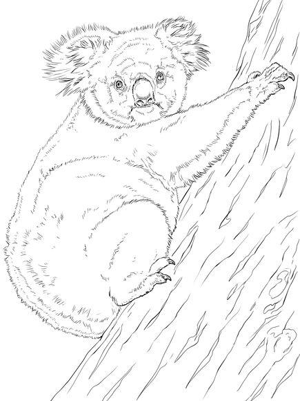 Koala Climbing Tree Coloring Page Free Printable Coloring Pages Animal Coloring Pages Tree Coloring Page Coloring Pages