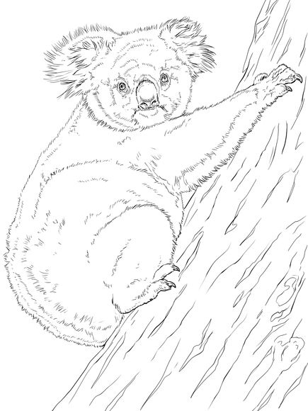 Koala Climbing Tree Coloring Page Animal Coloring Pages Tree