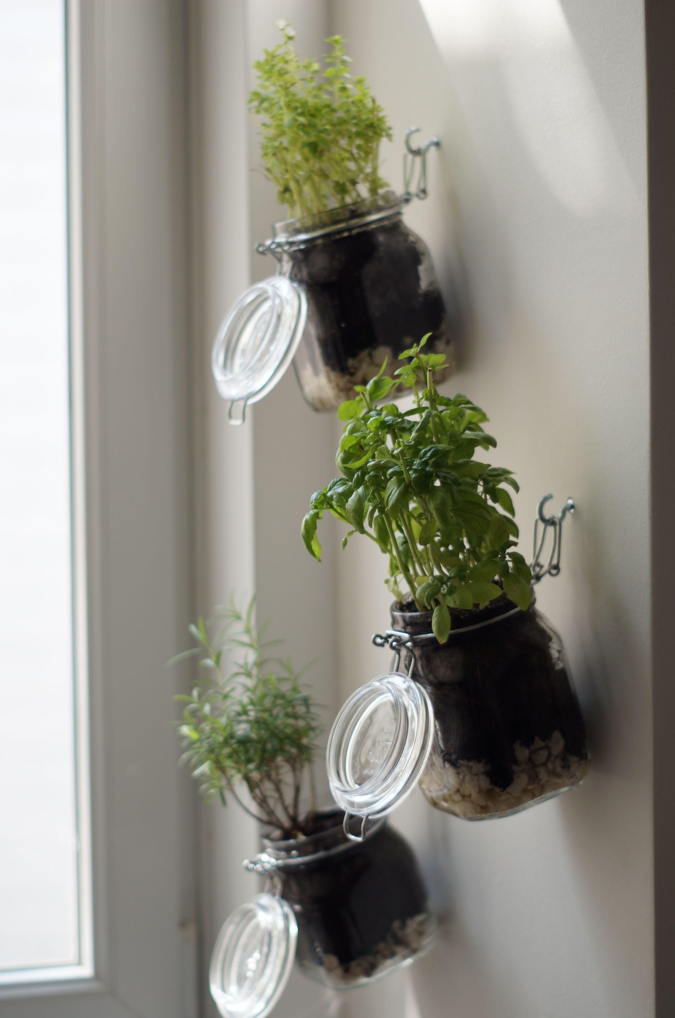 DIY Indoor-Kräutergarten: Schritt für Schritt Anleitung –