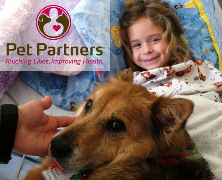 Dog Training For Therapy Dogs
