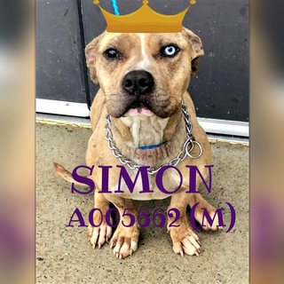 A005662 Simon Urgent List Clayton County Ac By Partners For Pets Inc Animal Projects Pet Adoption Clayton County