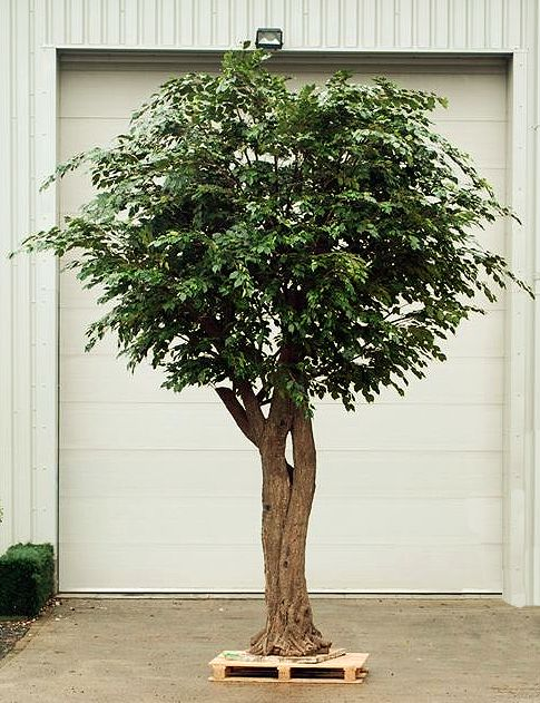 Artificial Fig Trees, are often the customer\'s first choice ...