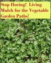 Photo of Organic Living Mulch for Vegetable Garden Paths!#design #designer #designs #desi…