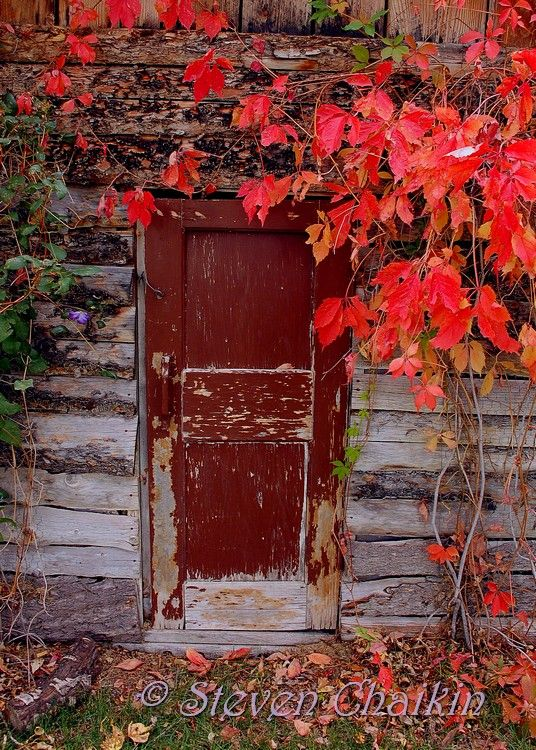 A door rarely used and hidden by the season...