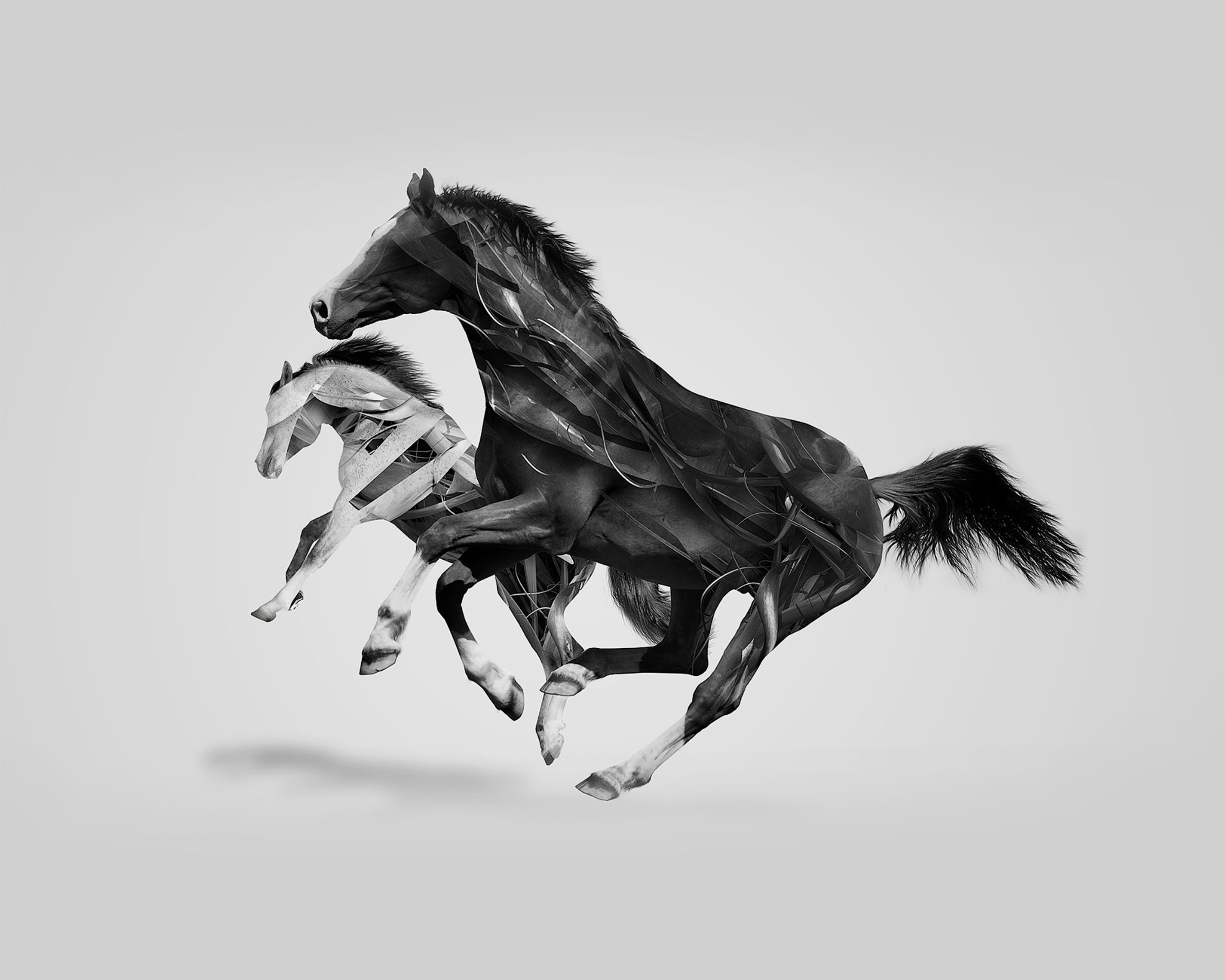 Best Wallpaper Horse Creative - ae04842054c0da0a6a0101ffd1693b67  Image_639218.jpg