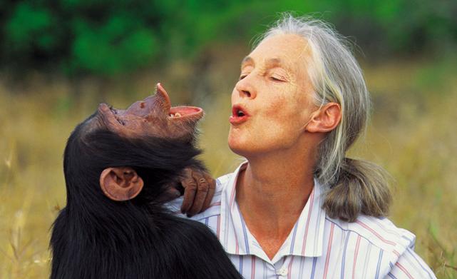 Zonnige gift aan Jane Goodall Foundation. WakaWaka-systemen voor rangers.