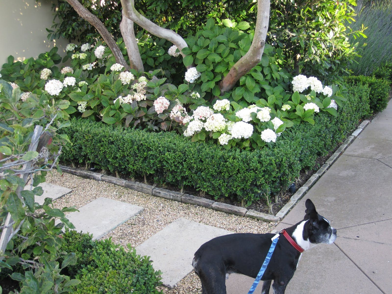 rectangle steppers recessed in gravel garden flowers shrubs