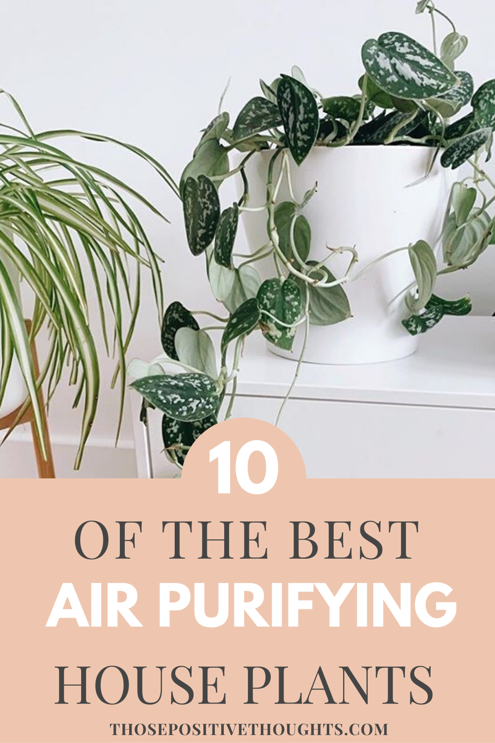 10 Best Air Purifying House Plants#air #house #plants #purifying#air #house #pla...,  #Air #House #pla #Plants #Plantsair #Purifying #purifyingair #purpleHousePlants