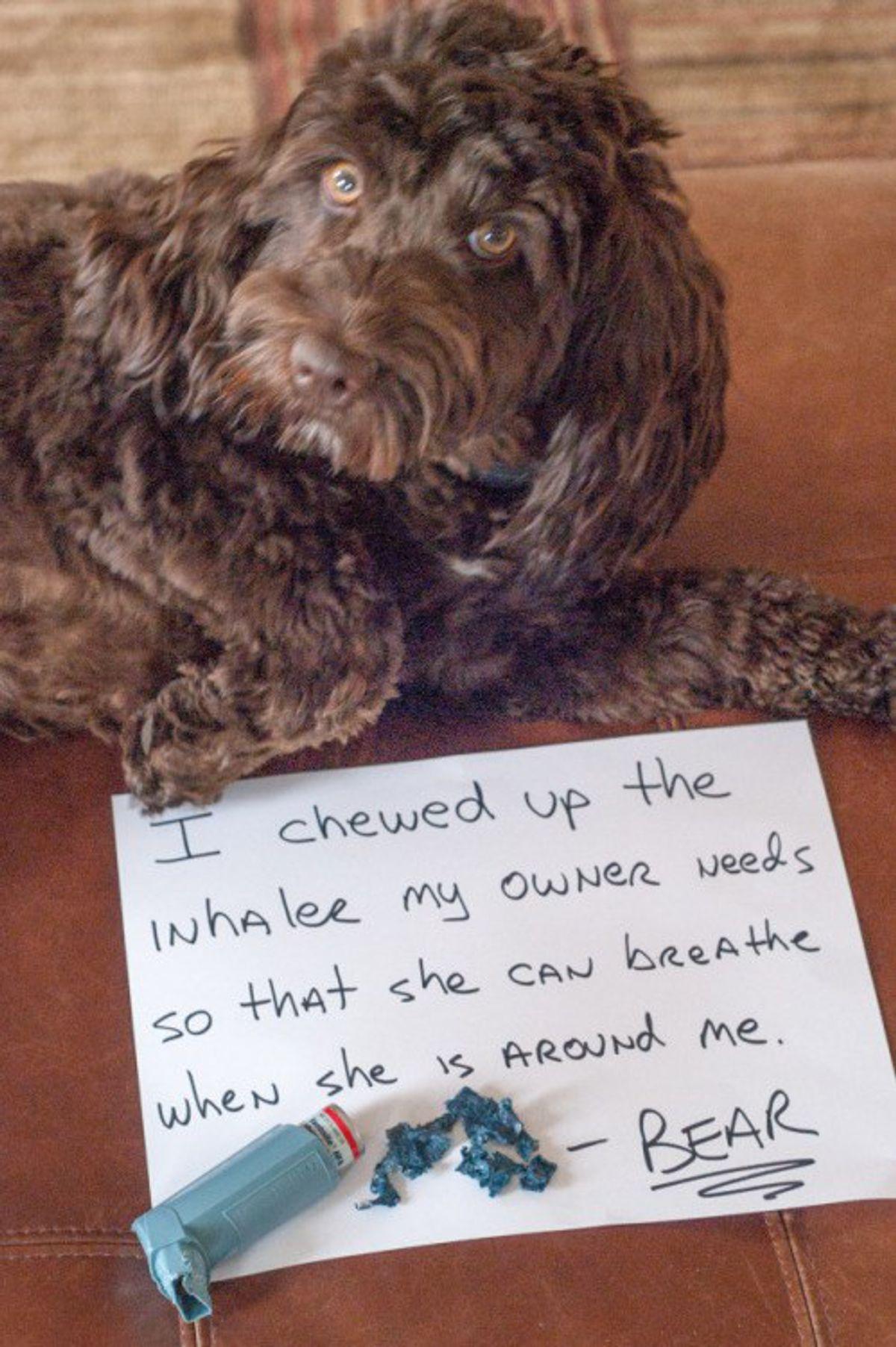 15 Hilarious Instances Of Dog-Shaming