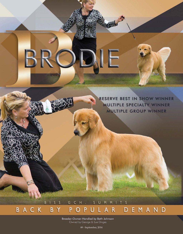 Gch Ch Summits Back By Popular Demand Sdhf Golden Retriever Golden Retriever Golden Retriever Funny Dogs Golden Retriever