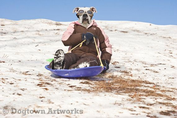 Dog Sled large original photograph featuring a by DogtownArtworks