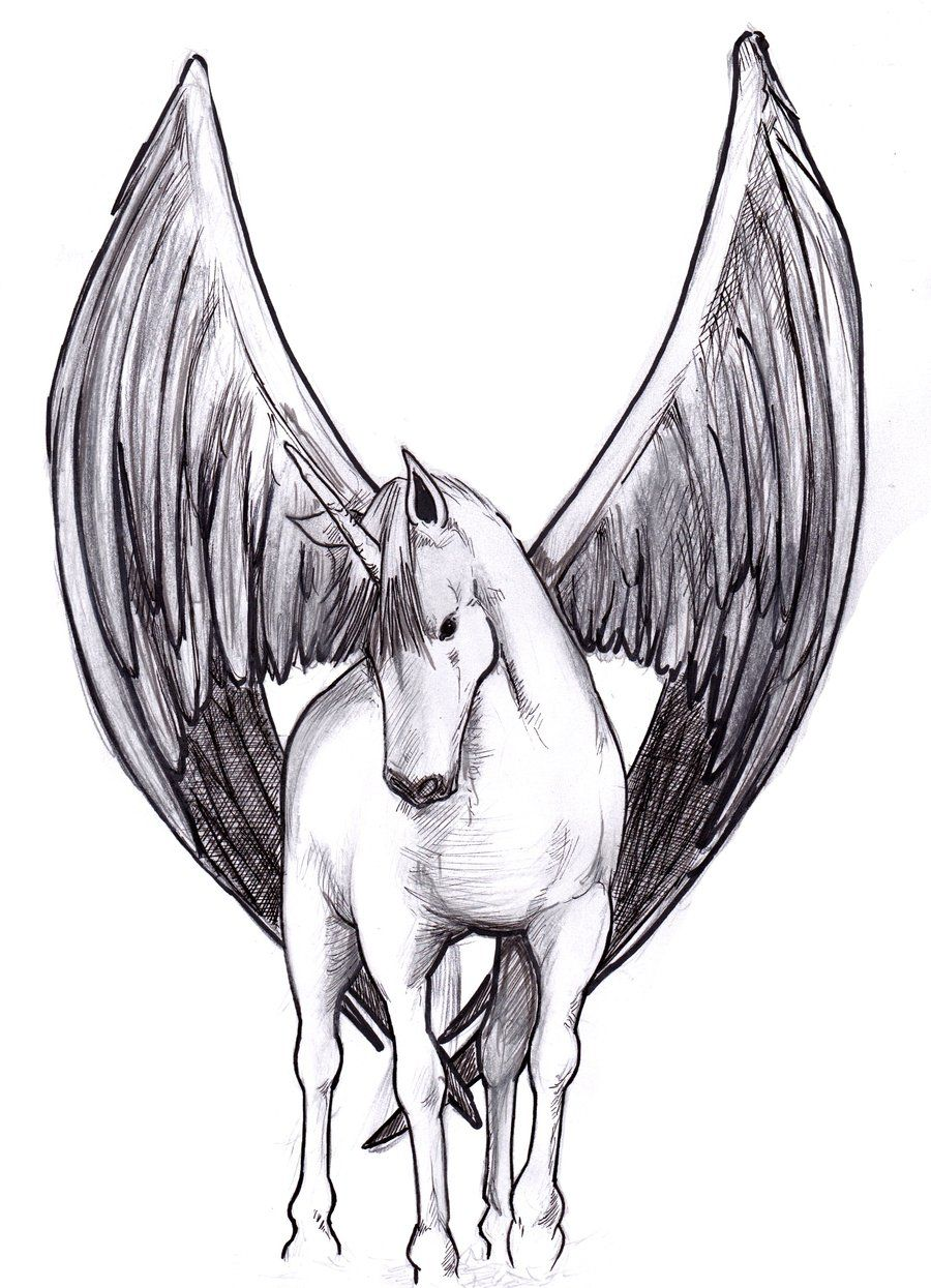 Winged Unicorn Unicorns Dragons Unicorn Unicorn Drawing Drawings