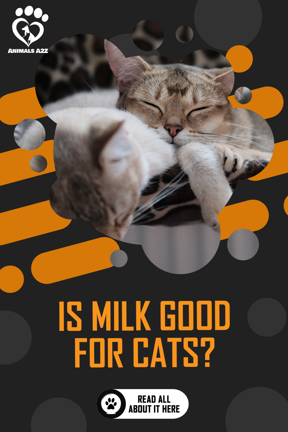 Is Milk Good for Cats? [ Detailed Answer ] in 2020