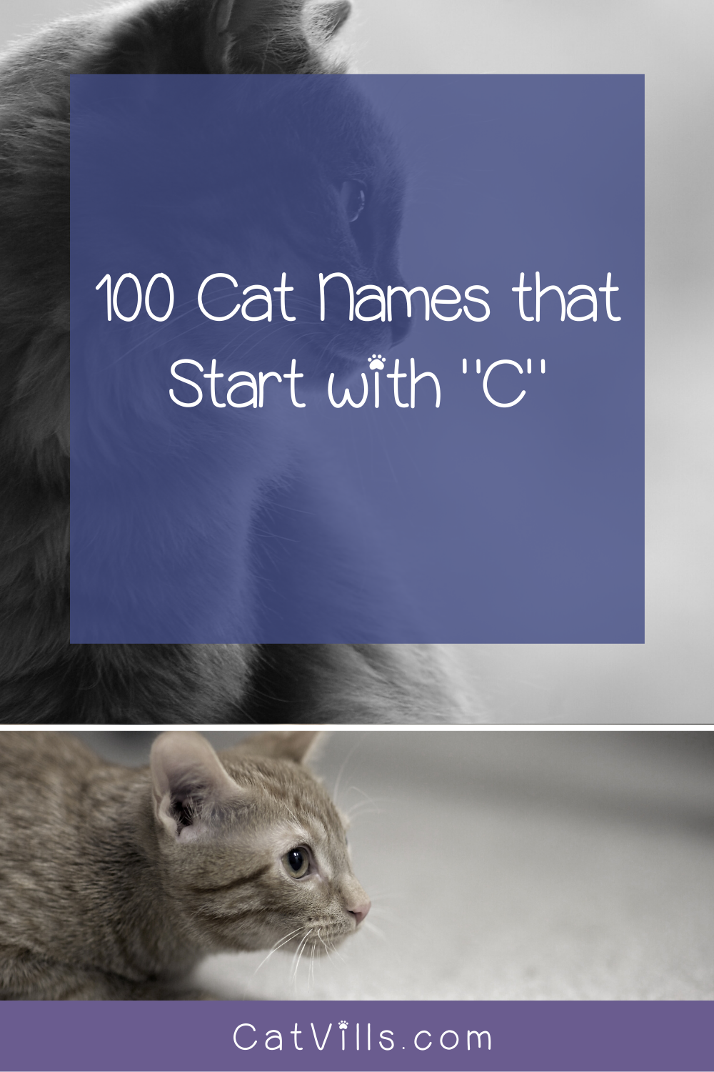 100 Cat Names That Start With C Catvills In 2020 Cat Names Cute Cat Names Word Cat
