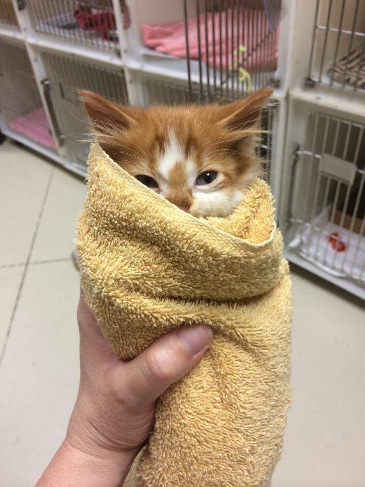 My Local Animal Shelter Posted This Little Purrito Animal Humour Funny Animals With Captions Funny Animals