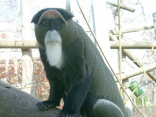 World's Most Exotic Animals   Extremely Expensive Exotic ...