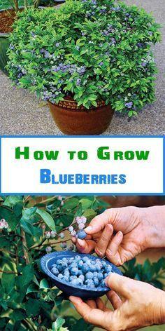10 einfache Anleitungen zum Anbau von Gemüse und Früchten in Behältern #anbauvongemüse