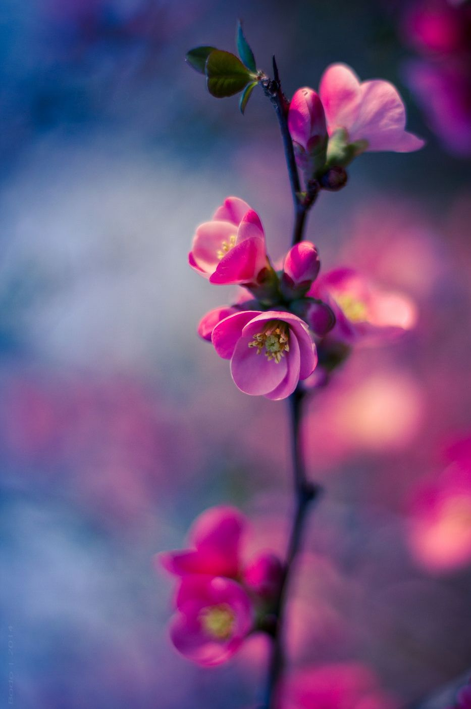 Just Breathe Beautiful Flowers Wallpapers Flowers Photography Flowers Nature