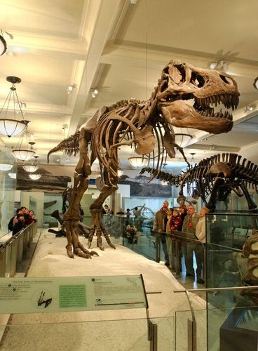 museum of natural history nyc favorite museums and galleries rh pinterest com