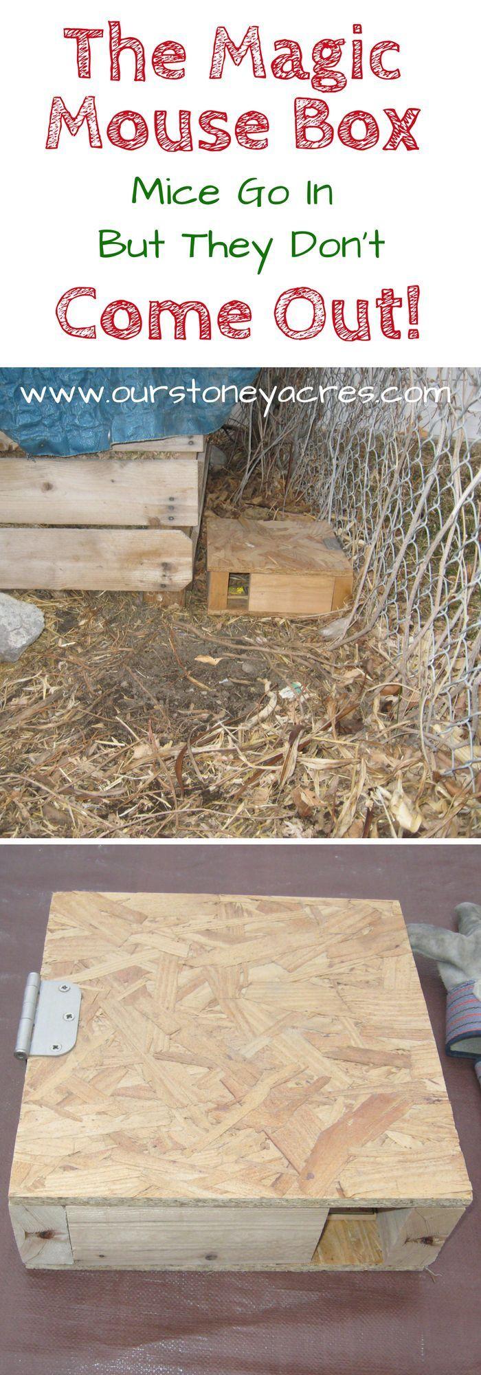 ae0aaef9d5677badf348b4e6b3cfacca - How To Get Rid Of Mice In Compost Bin