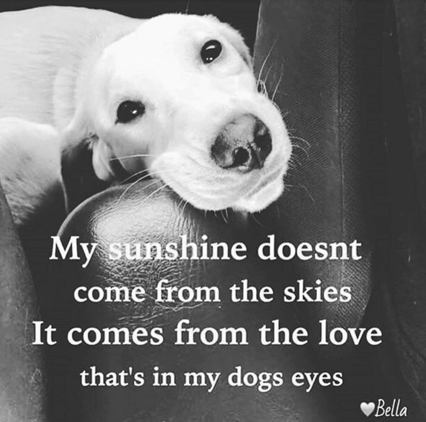I Love My Dog Quotes This is so cute and heart warming if your a dog lover save this! I  I Love My Dog Quotes